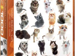 1000 MORITO – CAT BREEDS