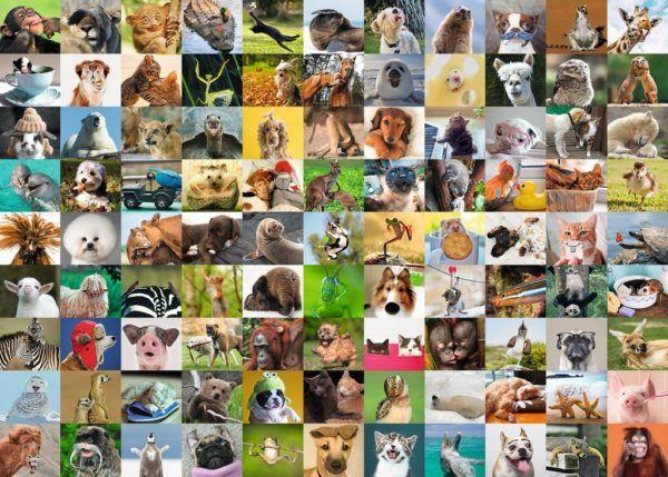 1000 99 DIVERTIDOS ANIMALES