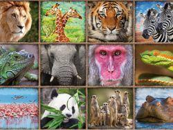 1000 COLLAGE ANIMALES SALVAJES