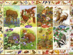 1000 FALCON - Fauna