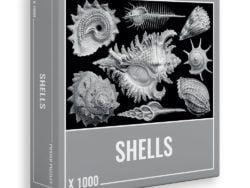 1003 Cloudberries - Shells