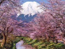 1000 Montaña Fuji