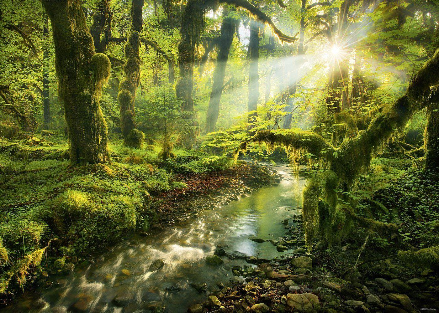"""1000 MAGIC FOREST """"SPIRIT GARDEN"""" - Puzzles tu me completas"""