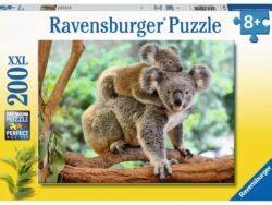 amor de koala